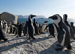 Cape Point Tour Highlights - Penguin colony and Cape Point tour