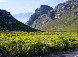 Cape Point Tour Highlights - Ou Kaapse Weg